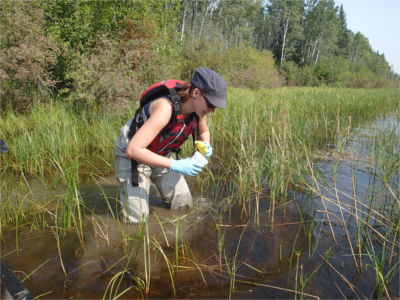 CRI student Stephanie Connor collecting an environmental DNA sample in a tributary of the Slave River, AB